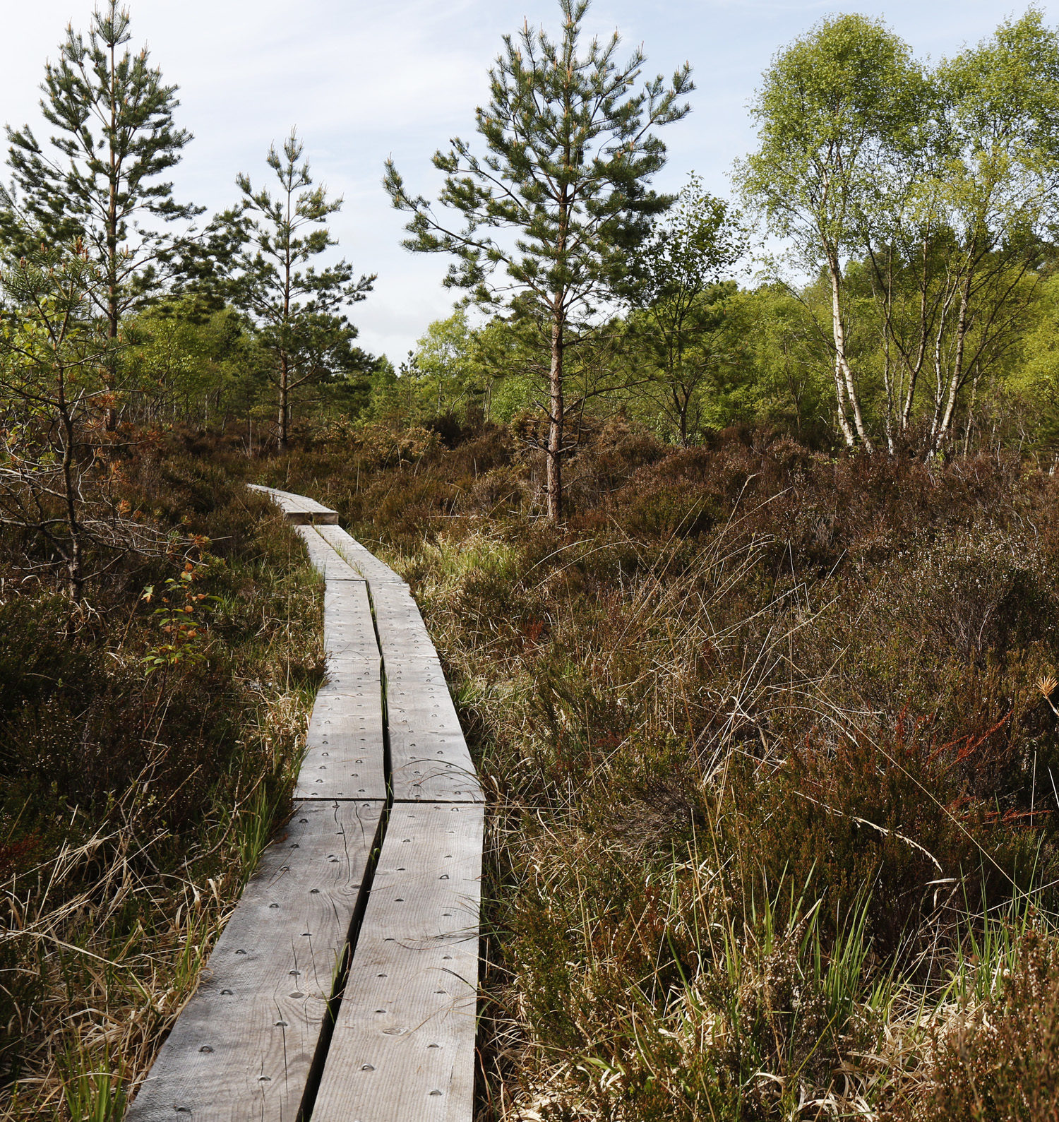 Abbeyleix  Bog Looped Walks
