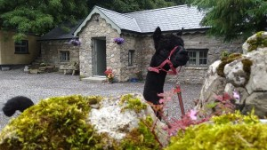 Hushabye Farm – Self Catering Accommodation on an Alpaca Farm