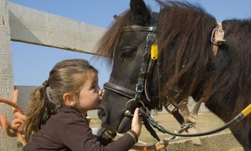 Castlewood Equestrian Centre