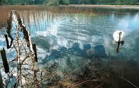 Ballinakill Gill's Pond
