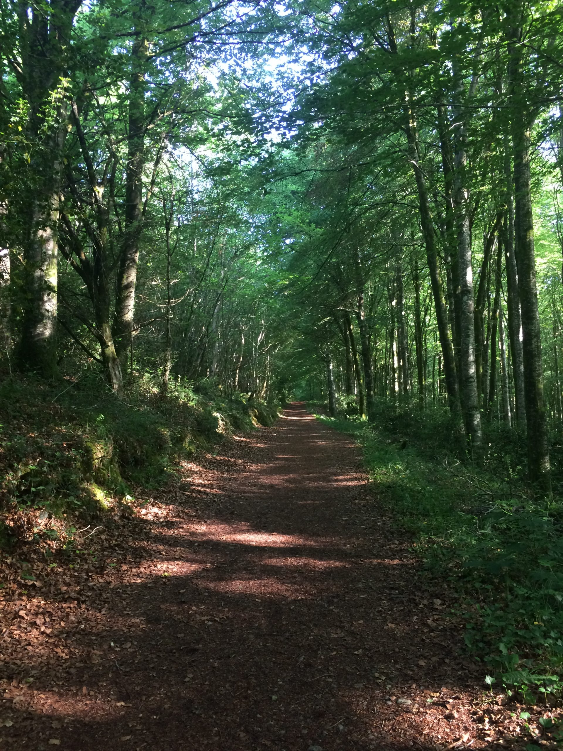 Oughaval – Beech Way Walk